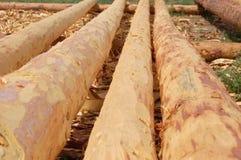 Logarithmes naturels de bois de construction   Photo stock