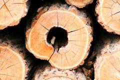 Logarithmes naturels de sauterelle noire Photo stock