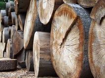 Logarithmes naturels empilés de bois de construction Image libre de droits