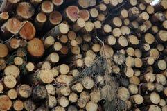 Logarithmes naturels empilés de pin Photographie stock libre de droits