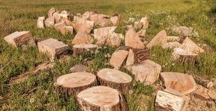 Logarithmes naturels en bois photographie stock libre de droits