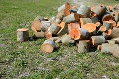 Logarithmes naturels en bois Images stock