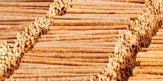 Logarithmes naturels en bois de bois de construction Photo stock