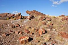 Logarithmes naturels Petrified Photo stock