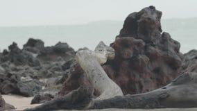 Logboek bij het strand met rotsen stock videobeelden