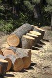 Logboek dat in brandhout wordt gesneden Stock Afbeelding