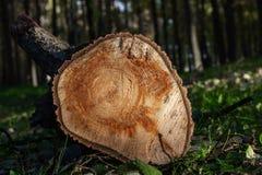 Logboek die in het bos liggen stock afbeelding