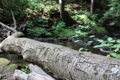 Logboek die over een kleine stroom leggen Stock Foto's