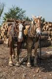 Logboek die team van paarden trekken royalty-vrije stock foto's