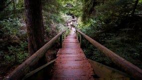 Logboek houten brug in het bos stock foto's