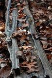Logboek met bladeren Royalty-vrije Stock Foto's