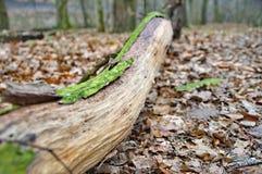 Logboek met groen mos Royalty-vrije Stock Afbeeldingen