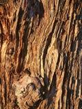 Logboek van de achtergrondtextuur het oude beboste boom van een bos Stock Foto