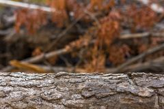 Logboek van hout in het bos met vage achtergrond Stock Foto