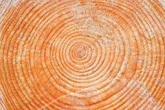 Logboek van pijnboomhout Royalty-vrije Stock Afbeeldingen