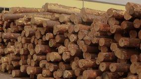 Logboeken bij de zaagmolen, pakhuis bij de zaagmolen, houtbewerkingsfabriek stock footage