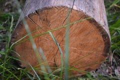 Logboeken die in het gras als achtergrond liggen Opent het gras het programma Gezaagde Boomboomstam Close-up van gesneden logboek stock foto's