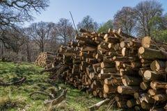 Logboeken die op stapel in bos drogen stock afbeelding