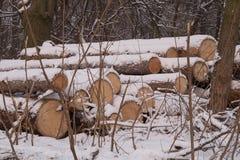 logboeken Een stapel van grote logboeken, registreren, die bomen in het de winterbos verminderen stock fotografie
