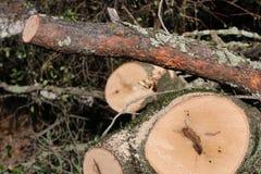 Logboeken en brandhout Royalty-vrije Stock Foto's
