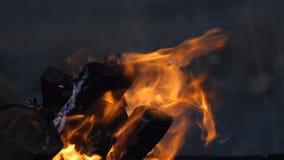 Logboeken het houten branden in openluchtkampbrand stock videobeelden