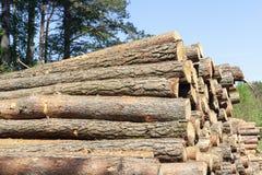Logboeken van bomen royalty-vrije stock afbeeldingen