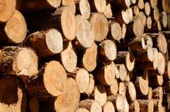 Logboeken van bomen - gehakte boomboomstammen - Stock Foto