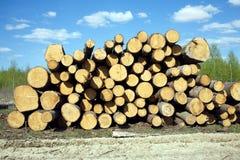 Logboeken van de landschaps de breedte gestapelde pijnboom Royalty-vrije Stock Afbeelding