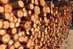 Logboeken van eucalyptus op een stapel Royalty-vrije Stock Fotografie