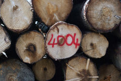 Logboeken van hout Royalty-vrije Stock Fotografie