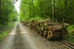 Logboeken van hout door een bosweg royalty-vrije stock afbeelding