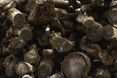 Logboeken van hout stock foto's