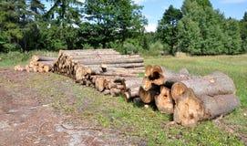 Logboeken van hout in het bos Stock Afbeeldingen