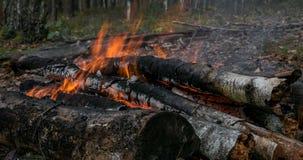 Logboekenbrandwond in het vuur in diep bos, close-upmening stock videobeelden