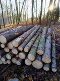 Logboekstapel en zon in het bos royalty-vrije stock fotografie