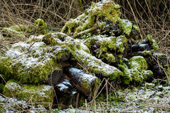 Logboekstapel - habitat voor invertebrtates en zoogdieren royalty-vrije stock fotografie
