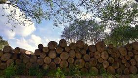 Logboekstapels De benutting van bosbouwbomen stock footage
