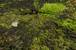 Logboektextuur met mos Stock Foto's