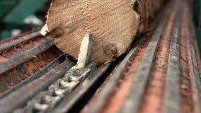 Logboektransportband die logboek op geautomatiseerde lijn voor verdere verwerking trekken stock footage