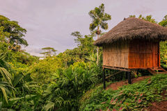 Loge, Amazon Rainforest, Ecuador Royalty Free Stock Image