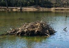 Loge de castor sur l'étang de Pandapas image libre de droits