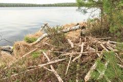Loge de castor sur le lac de forêt Photos libres de droits