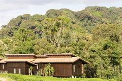 Loge de forêt de Nyungwe Photos libres de droits