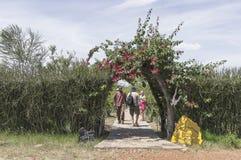 Loge i Kenya Arkivbild