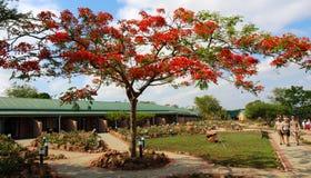 Loge i Sydafrika Arkivfoton