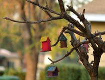 Logement d'oiseau photo libre de droits