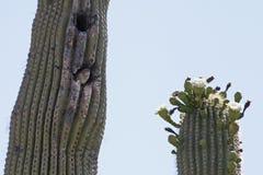 Logement de l'Arizona Photos stock