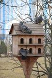Logement pour des oiseaux Photo libre de droits