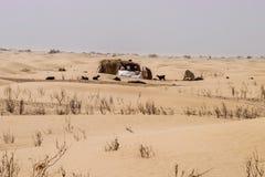 Logement traditionnel de paille de nomade de désert avec des chèvres voisines Image stock