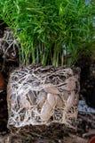 Logez les usines, fleurs avec un système ouvert de racine Greffe à l'usine image stock